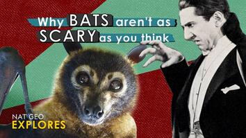 Why bats aren't as scary as you think