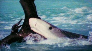 World's Weirdest: Albatross vs. Shark