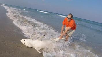 Watch: Beachgoers Rescue Shark From Fishing Line