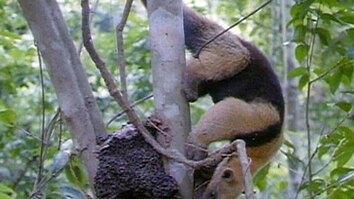 Raiding the Nest