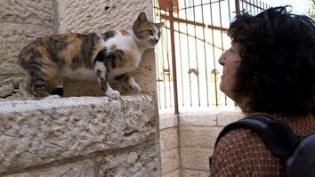 Holy Cats! Jerusalem's Strays and Their Unsung Guardian