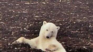 Highlights from the Polar Bear Cam