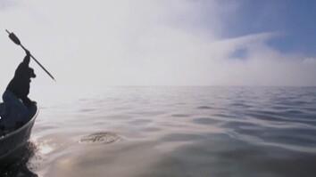 Seal Hunt