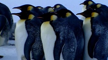Fishing With Emperor Penguins