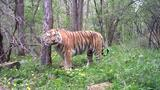 Meet Russia's Tiger Guardians
