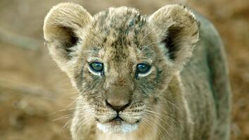 Shivani Bhalla: Securing a Future for Lions