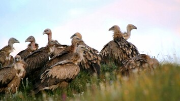 Should Tourists Watch Vultures Eat the Dead?