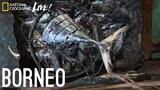 We Are What We Eat: Borneo