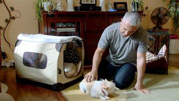 Cesar 911: Surrender State