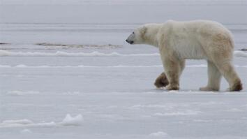 See How They Track Polar Bears in Russia