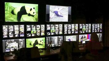 High-Def Panda Pregnancy Watch