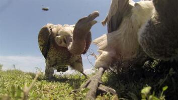 POV: If Vultures Ate You, Here's What You'd See