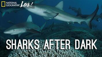 Photographing our Seas: Sharks After Dark