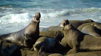 United States of Animals: Jumbo Beach Masters