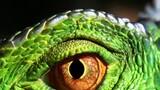 MY SHOT Minute - Reptiles