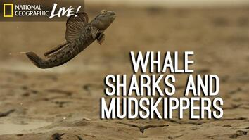 Photographing our Seas: Whale Sharks and Mudskippers