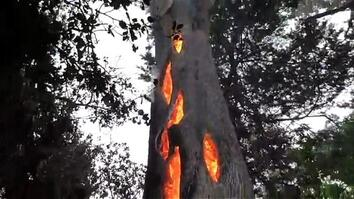Watch an Eerie Tree Burning From the Inside in California Wildfire