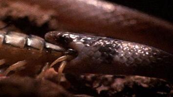 Centipede vs. Snake