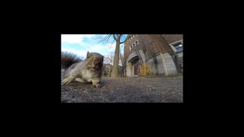 Deciphering the Strange Behavior of Squirrels