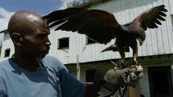 This Man Turned His Life Around by Mastering Falconry