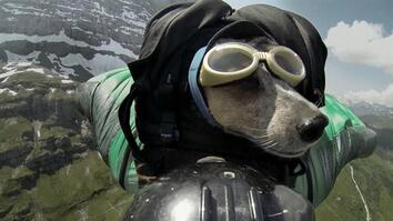 Dean Potter BASE Jumps With His Dog