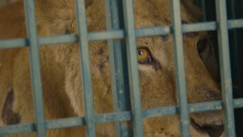 See How Syrian Zoo Animals Escaped a War-Ravaged City