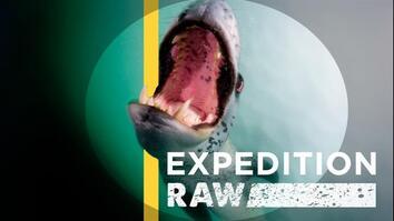 Leopard Seal vs. Leopard Seal—Underwater Food Fight