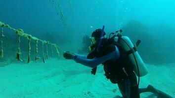 Sometimes Saving Fish Takes Fishermen
