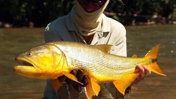 Catching Monster Fish on the Amazon