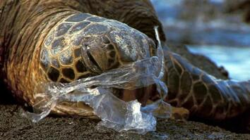 See How It Feels to Be an Ocean Animal Stuck in a Plastic Bag