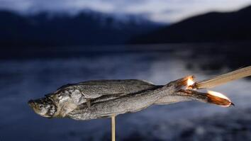 Watch a Fish Transform From Animal to Candle