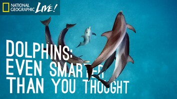 Dolphins: Even Smarter Than You Thought