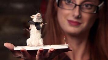 "Dead Mice Get Second ""Life"""