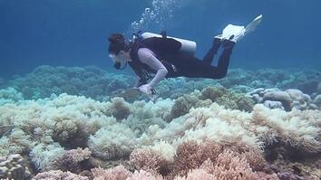 The Great Barrier Reef May Be Dying Faster Than We Thought