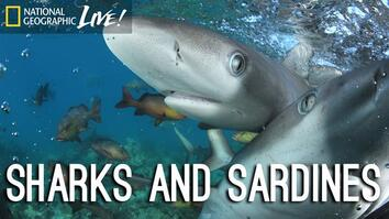 Photographing our Seas: Sharks and Sardines