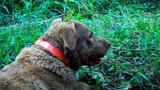 Poop-Sniffing Dog Tracks Predators