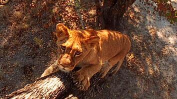 World's Deadliest: Lion Cubs vs. Baboon