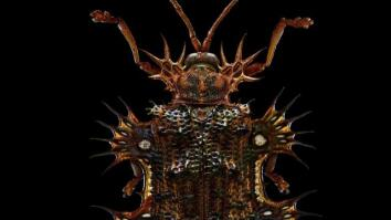 Beauty Through the Microscope: Bugs Like You've Never Seen Them Before