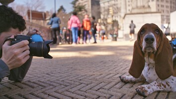 A Day in the Life of 'The Dogist,' Pet Photographer Extraordinaire