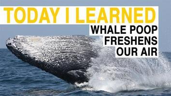 TIL: Whale Poop Freshens Our Air