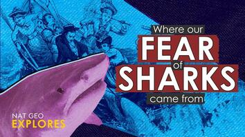 Where our fear of sharks came from