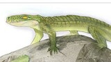 Prehistoric Croc Was Mammal-like