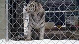 Ohio Tigers