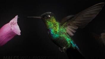 Watch a Hummingbird Fly in Mesmerizing Slow-Mo