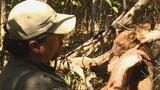Preserving Madagascar's Unique Species