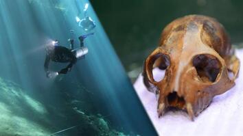 Underwater Lemur Graveyard Discovered
