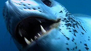 World's Deadliest: Seal vs. Penguin