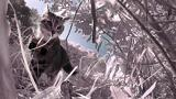 "POV ""Kittycam"" Reveals These Stray Cats Prey on More Than Birds"