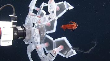 See a New Robot That Captures Sea Creatures—Gently