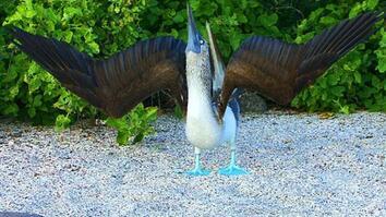Galápagos' Unique Animals